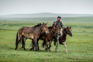 MD19 Race Day 2-herder bringing in horses for riders