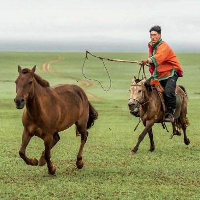 paard_vangen_1
