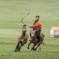 paard_vangen_2