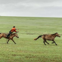 paard_vangen_3