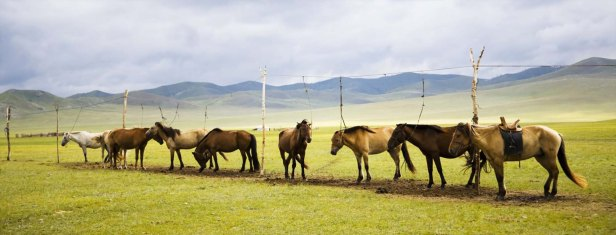 wachtende_paarden